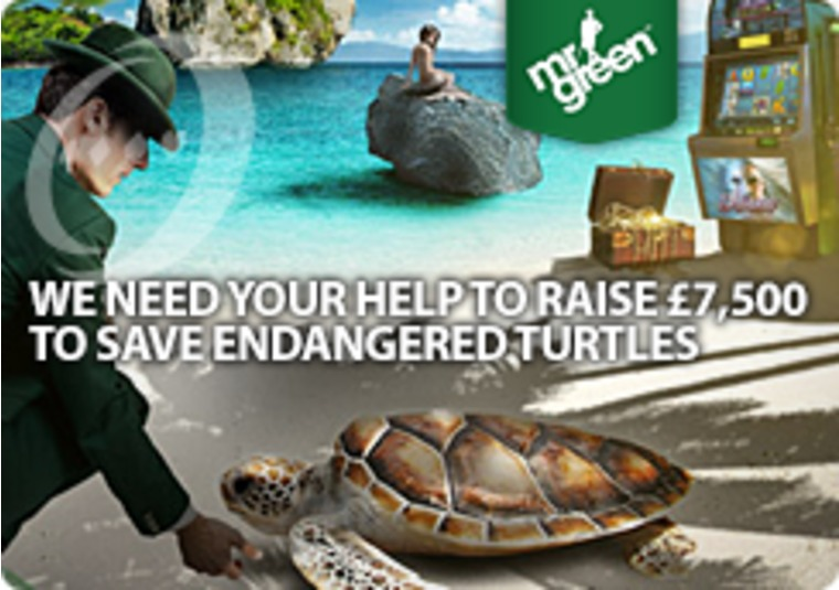 At Mr Green you can save endangered turtles by playing slots